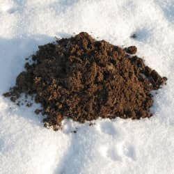 Unfortunately Moles Don T Hibernate For The Winter Mole Winter Herbs