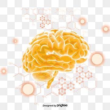 Human Cerebral Structure Medicine Cuerpo Humano Geometrico Ciencia Medica Png Y Psd Para Descargar Gratis Pngtree Brain Art Human Clipart Brain Vector