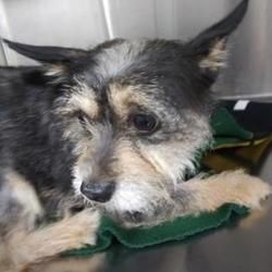 Fort Worth Texas Terrier Unknown Type Small Meet Rocky A For Adoption Https Adoptapet Com Pet 28241017 Fort Worth Tex In 2020 Pets Pet Adoption Dog Adoption