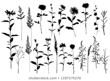 Set Of Silhouettes Of Flowers Camomile Daisy Campanula Rose Wild Flowers Vector Black Color Isolated On Flower Silhouette Silhouette Images Wild Flowers