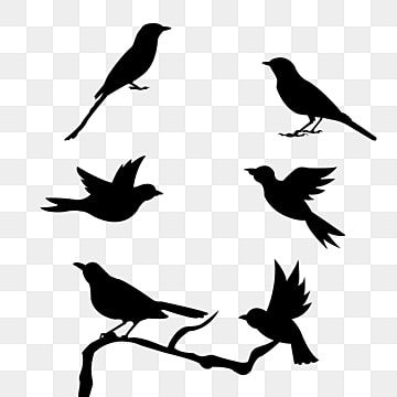Bird Flying Silhouette Outline Birdie Silhouette Wing Png Transparent Clipart Image And Psd File For Free Download Flying Bird Silhouette Birds Flying Bird Silhouette