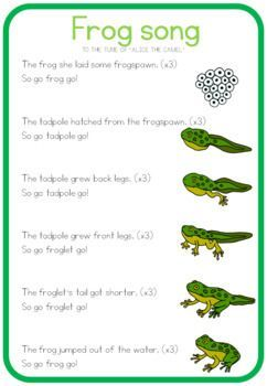 Frog Life Cycle Song With Images Lifecycle Of A Frog