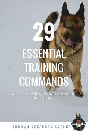 29 Essential German Shepherd Training Commands German Shepherd