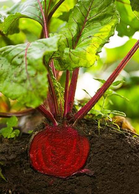 The 14 Easiest Vegetables To Grow Ideal Me Growing Beets Easy Vegetables To Grow Growing Vegetables