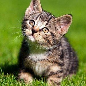 A Lovely Cat Cat Cute Animals Kitten Photos Kittens Cutest Animal Planet