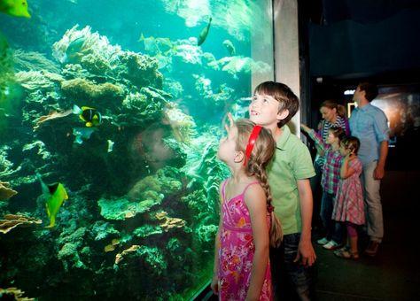 Aquarium and Terrarium House - Schönbrunn Zoo