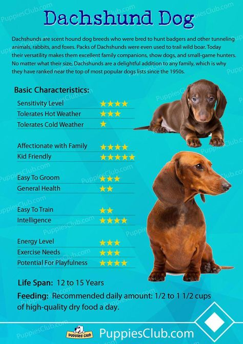 Some Of The Things We Respect About The Curious Daschund Pup