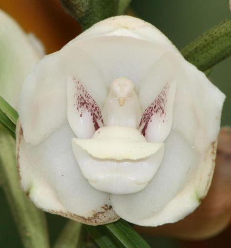 68 Orchids Ideas ورد نباتات زهرة