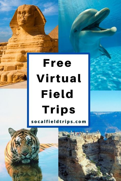 Virtual field trips bring text books to life! On a virtual field trip, students can visit museums, historical sites, national monuments and other places of importance around the world from the comfort of their own home or regular classroom. Learning Websites, Home Learning, Fun Learning, Virtual Travel, Virtual Tour, Educational Activities, Learning Activities, Educational Websites, People Reading