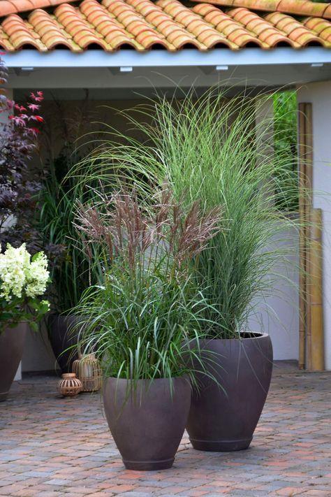 Große XXL-Gräser peppen jedes Gartenbeet auf und machen auch im - pflanzen topfen kubeln terrasse