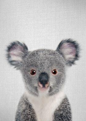 Baby Koala Colorful Animals Poster Print Metal Posters In 2020 Baby Animal Prints Animal Posters Baby Koala