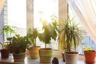 How To Get Rid Of Mold In Houseplant Soil Smart Garden Guide Shade Tolerant Plants House Plants Smart Garden