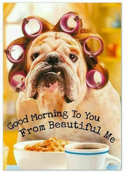 GOOD MORNING! A.L. Now I know what you look like in the Mornings, I don't feel to bad meself x :-)