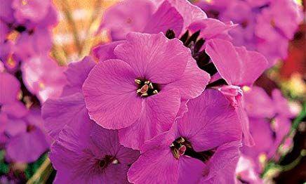 Gram S Gardens Amazon Com With Images Pink Flowers Art April Flowers Flower Farm