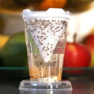 Fruchtfliegenfalle Trapango Obstfliegen Fruchtfliegenfalle Fruchtfliegen