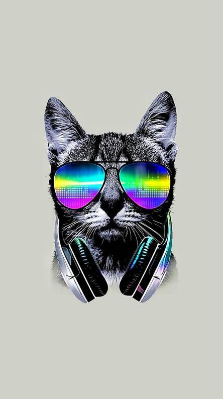 Cool Cat Cat Wallpaper Animal Wallpaper Nature Iphone Wallpaper Cat wearing glasses wallpaper hd