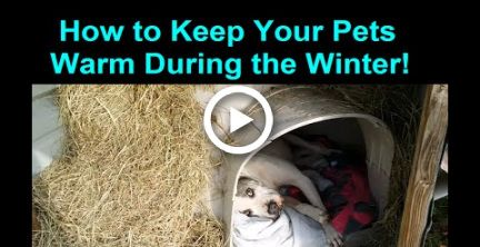 How To Keep A Dog Warm During Winter Cold Weather Warm Dog House
