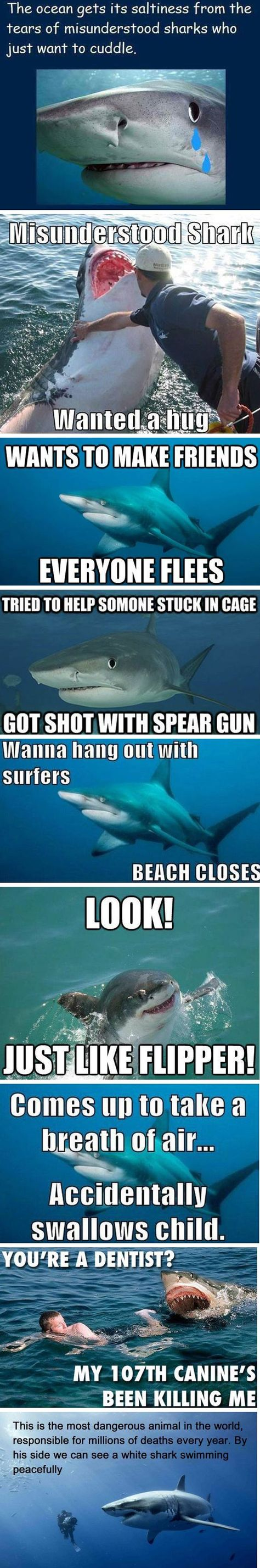 Sand tiger shark information amp pictures of sand tiger sharks - Best 10 Shark Attack Pictures Ideas On Pinterest Shark Week 2014 Watermelon Fruit Displays And Watermelon Shark Carving