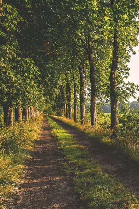 51 ideas for summer nature photography pathways Beautiful World, Beautiful Places, Beautiful Pictures, Amazing Places, Country Life, Country Roads, Country Living, Landscape Photography, Nature Photography