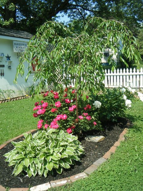 40 Ideas Weeping Cherry Tree Landscaping Front Yards Backyards For 2019 Weeping Cherry Tree Cherry Trees Garden Front Yard Landscaping