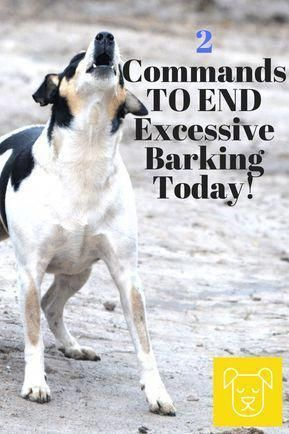 The Easiest Way To Put An End To Excessive Barking Today