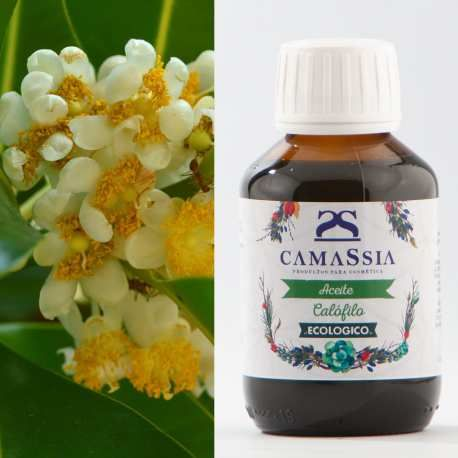 Crema Para Prevenir Las Varices Aceite De Calofilo Bio Tamanu Calophyllum Inophyllum En 2020