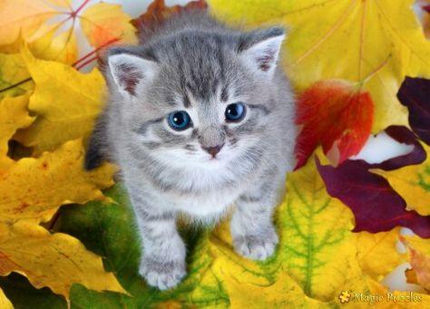 Candy Kittens Kittens Cutest Kittens Animals Beautiful