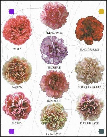 New Carnation Varieties Amber Remember What I Was Saying About Carnations Not Just A Filler Flower Carnation Flower Colorful Wedding Flowers Flower Farm