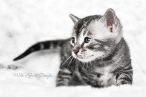 Pin On Bangle Kittys