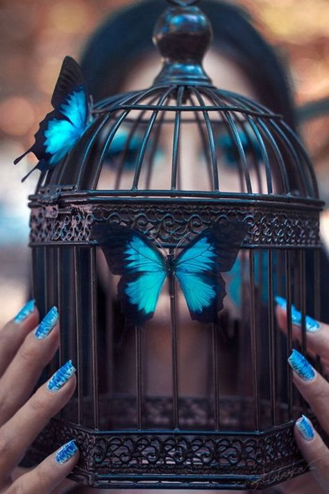#butterfly #blue #birdcage #cage #fingers #nails #fly #flyaway #letgo