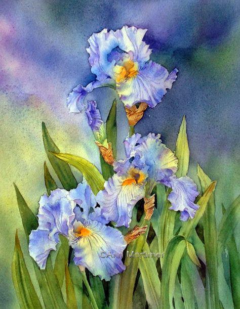 vibrant colour  SOLD Bearded Iris  Large Botanical Etching