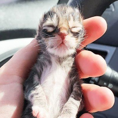 Newborn Kitten Who Was Frozen Solid Grows Up To Be Strong And