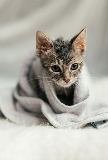 Kitten Wrapped In A Towel After A Bath Catgroomingbath Cat Grooming Cat Bath Cat Biting