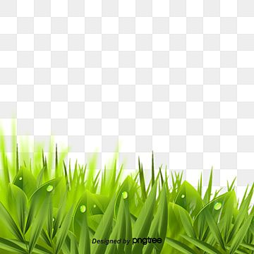 Green Tea Background Material Tea Tea Tree Green Tea Tree Png Transparent Clipart Image And Psd File For Free Download Green Leaf Tea Watercolor Trees Tea Tree