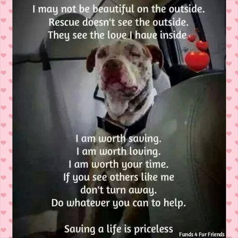 Alabama Angels Dog Rescue - Home