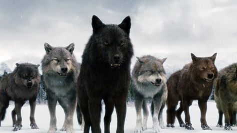 Twilight Saga Wolves In 2019 Twilight Wolf Pack Twilight