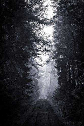 Dark Forest Dark Forest Nature Photography Dark Photography