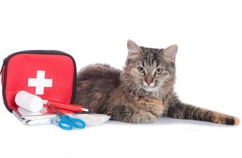 Erste Hilfe Bei Katzen Was Ihr Im Notfall Tun Konnt Katzen
