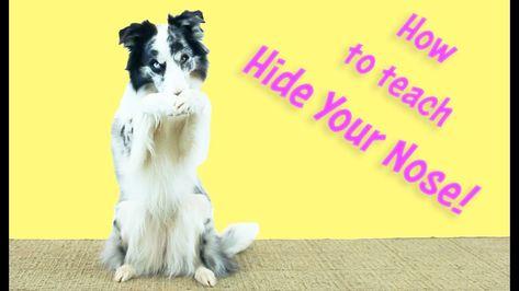 Cover Your Nose Kikopup Dog Tricks Training