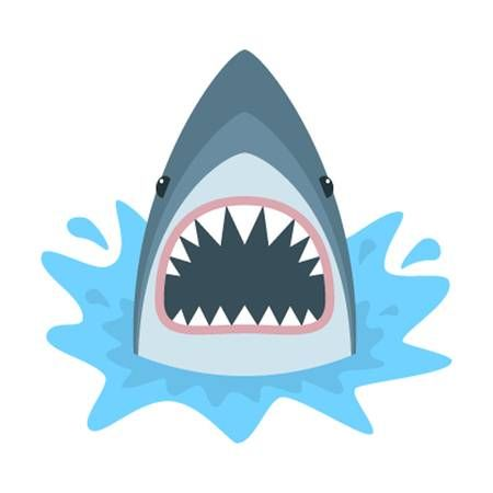 Shark With Open Mouth Shark Isolation On A White Background Shark Images Shark Illustration Shark Drawing