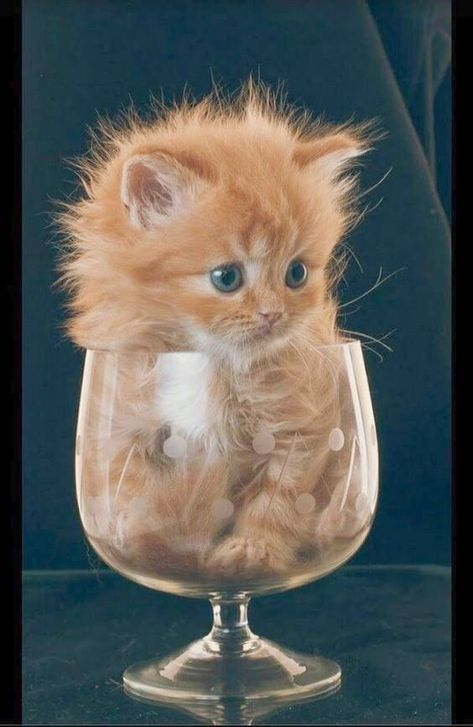 Cats And Kittens For Sale In Torbay Than Cute Animals Eating Cute Cats And Dogs Cute Animals Cute Cat Gif