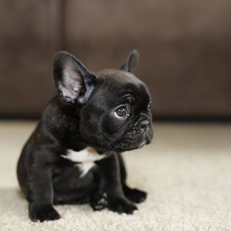 """10 Dog Breeds That are Only For Rich Owners From your friends at phoenix dog in home dog training""""k9katelynn"""" see more about Scottsdale dog training at k9katelynn.com! Pinterest with over 18,500 followers! Google plus with over 120,00 views! You tube with over 400 videos and 50,000 views!! Twitter 2200 plus;) proudly serving the valley for 11years!"""
