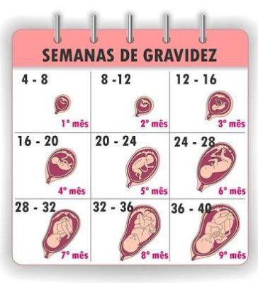 25+ melhores ideias de Embarazo 8 semanas no Pinterest   8 semanas ...