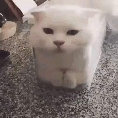 Undeniable proof that cats are liquid - Imgur