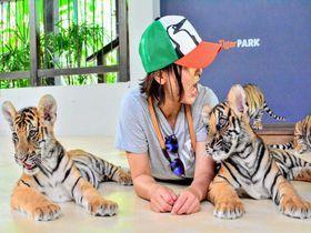 もふカワな赤ちゃんトラに触れあえる パタヤ タイガーパーク Travel Guide 旅行ガイド 旅行 タイ 観光