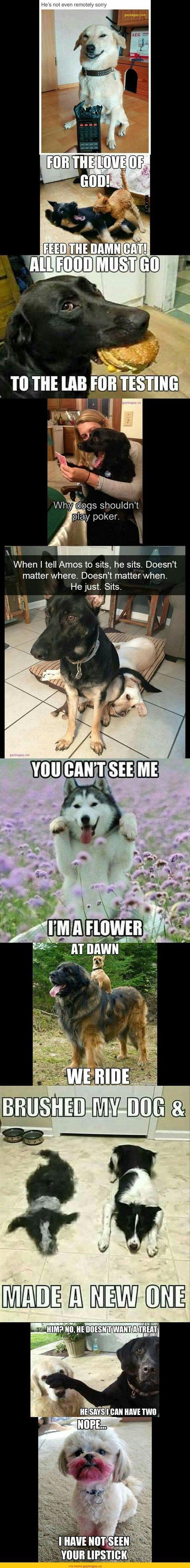 120 Ideas De Funny Animals Animales Memes De Animales Divertidos Humor Divertido Sobre Animales