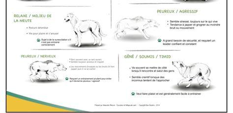 Comprendre le langage corporel du chien