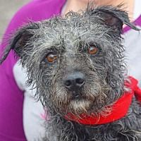Available Pets At Animal House Shelter Inc In Huntley Illinois Animals For Kids Pets Dog Adoption