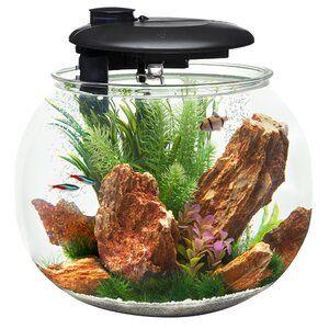 10 fish tank gallon setup best ❣️ 2021 for Best betta