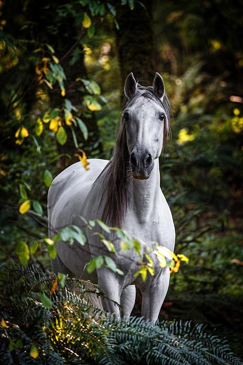 Andalusian Photograph - Forest Beauty by Wes and Dotty Weber